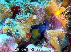 """""""Clam Shell Dweller""""  This guy would sit for me as long a... by Kelli Shaw"""