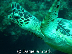 flirty turtle...he liked to play. by Danielle Stark