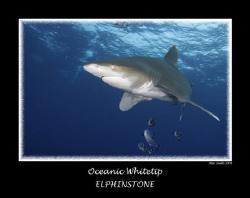 Longimanus at Elphinstone  full frame 10mm fish eye by Stew Smith