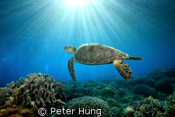 5d with sea&sea strobe, morning dive at Sipadan, Malaysia by Peter Hung