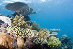 Hard corals located on the outer great barrier reef.  N... by Cal Mero