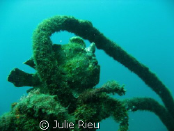 Well disguised frogfish, Lembeh Strait, Indonesia by Julie Rieu