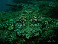 Crocodile Rock.... by Allen Walker
