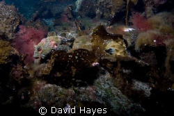 November diving in Alaska's Prince William Sound. A small... by David Hayes