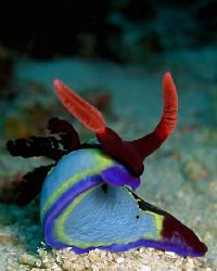 Another Nudi. Casio Exilim by Andrew Macleod