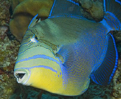 Due to recent surgery, my husband/dive buddy Jim didn't d... by Deborah Chambers