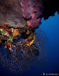 This photo shows more evidence of the reef life that cont... by Steven Anderson