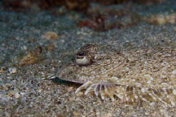 Flounder by Andrew Macleod