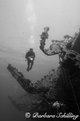 Diver along the Salem Express by Barbara Schilling