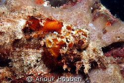 Scorpionfish. Picture taken on the second reef off Negomb... by Anouk Houben
