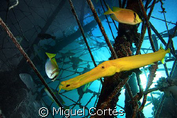 Life under the jetty of Mabul. by Miguel Cortés