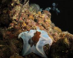 Lucky shot on night dive in Roatan.  The octopus was chan... by David Heidemann