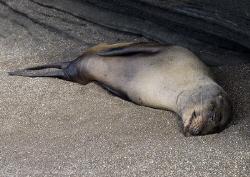 Afternoon nap! Santiago. Galapagos. D200, 18-200mm. by Derek Haslam