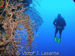 fernando having fun in black wall dive site at parguera ,... by Victor J. Lasanta