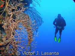 fernando having fun in black wall dive site at parguera ,... by Victor J. Lasanta