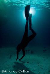 Freediver at night.  Tiger Beach, Bahamas  ©Amanda Cotton by Amanda Cotton
