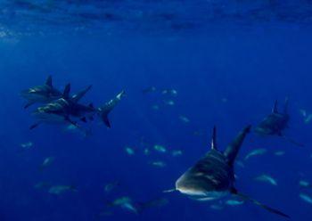 With camera  just under the surface...Bahamas by Claudia Pellarini