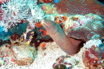 Puerto Galera (Philippines) Nikon Coolpix 5000, case Sea&... by Ugo Gaggeri