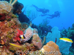 aqua viva dive team {luis} having fun in mermaid point di... by Victor J. Lasanta