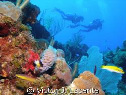 aqua viva dive team {luis} having fun in mermaid point di... by Victor J. Lasanta