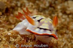 Chromodoris conchyliata. Picture taken on the second reef... by Anouk Houben