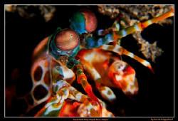 Mantis Shrimp,  D300, 105VR, Inon 165 diopter by Kay Burn Lim