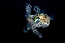 Defensive squid.  nikon d80, 2 x ds 51 strobes, 60mm by Cal Mero