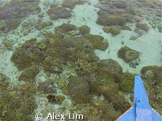 Low tide at Bunaken by Alex Lim