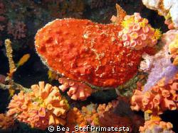 Hard coral and oyster.Canon G9 & Inon D2000 strobe. by Bea & Stef Primatesta