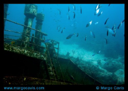 The Sea Star wreck near Gran Bahamas island. by Margo Cavis