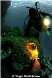 Reef St/ Johns by Sergiy Glushchenko