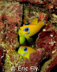 Lemon peels, haps reef, guam by Eric Fly