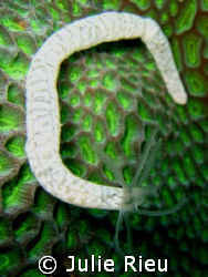 Life on coral, Koh Tao, Thailand by Julie Rieu