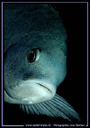 Face to face with this beautiful Snapper... :O) ... by Michel Lonfat