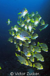 reliable gang of groupers by Victor Zucker