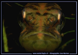 Picture taken tonight during a night dive... :O) ... by Michel Lonfat