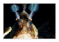 Lionfish. by Juergen Gangoly