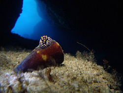 Nudibranch on cone by Martin Dalsaso