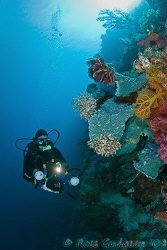 Kristin cruising the wall.  Wakatobi, SE Sulawesi.  Canon... by Ross Gudgeon