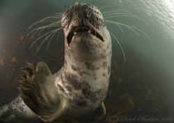 Grey seal. Farne islands. D200, 10.5mm. by Derek Haslam