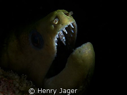 """Moray in decent light"" from Dhuni Kolhu, Maldives. by Henry Jager"