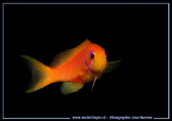 Face to face with this small Damselfish... :O) ... by Michel Lonfat