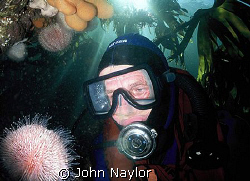 diver and sea urchin in the kelp by John Naylor