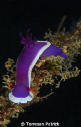 Nudibranco by Torresan Patrick