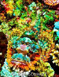 Scorpionfish taken during a dive trip to Puerto Galera, P... by Bill Stewart