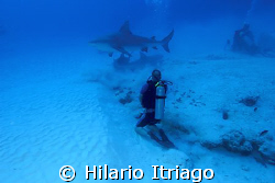 Bull Shark near P. del Carmen Quintana Roo. by Hilario Itriago