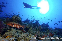 A Grouper trying to swim out of the picture ;-) by Barbara Schilling