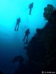 Diver Fallout! This photo was taken with my strobes turne... by Steven Anderson