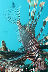 diving US Coolidge in Vanuatu, watching me closely by Brian Naylor