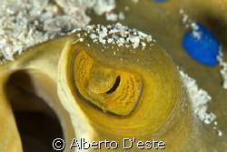 Stynray's eye - Nikon D70S - 105 macro - DS160 by Alberto D'este